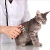 Ветеринарные клиники в Саранске